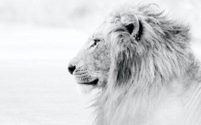 Leeuwenpoort 2020: Activeren van je zielsmissie